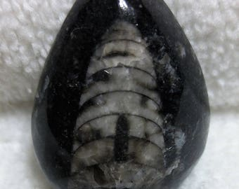 Orthoceras Fossil Cabochon