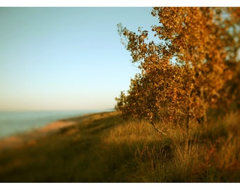Nature Photography - Landscape Photograph - Michigan Art - Autumn Art - Lake Michigan Art - Amber - Great Lakes Art -Alicia Bock - Tree Art