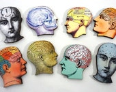 Medical Wood Heads  - A Collection of 8 Phrenology Heads