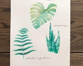 Botanical 8.5 X 11 Watercolor Original Art