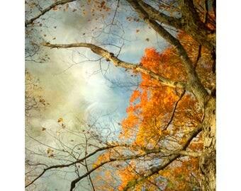 Autumn Landscape, Tree Photography, Abstract Art, Orange Blue Wall Art
