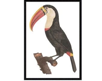 Toucan art print | Toucan print | toucan wall decor | bird art | bird print | bird illustration | toucan | nursery decor | litecoin