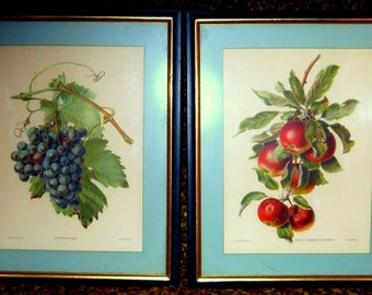 2- Lithograph Botanical Prints - 1940s Framed Art Floral Print, ready to hang Wall Art, Nature Prints, Antique Wall Art, Grapes, Apples