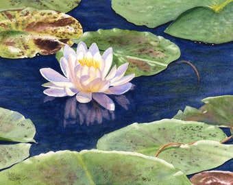 Water Lily Watercolor Painting Original by Cathy Hillegas, 11x14 painting, original watercolor, lake house, floral watercolor, gift for mom