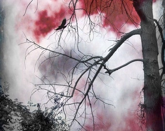 "Surreal landscape photography nature gothic tree woodland red white black - ""The night of""  8 x 10"