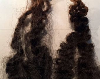 Beautiful Black Border Leicester Dark Brown w/ Tiny Strands of Gray Throughout Washed/Separated Wool Locks for Primitive Doll Hair-1 full oz