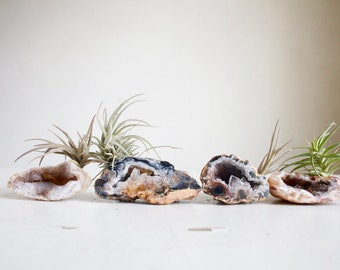 Unique Gift For Dad, Tiny Air Plant on Agate Crystal Garden, Little Something,  Budget Minded Gift For Him, Natural Boho Decor, Father's Day