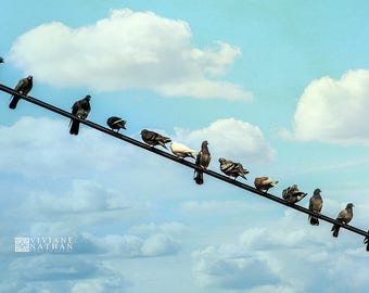 Birds on a line photography, pigeons photography, birds, minimalist bird photography, color birds on a line photography, nursery wall print