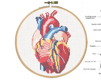 DIY Anatomical heart / embroidery Cross Stitch .pdf / Instant Download