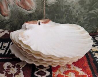 Vintage Seashell Tiki Plates Set of 6 Appetizer Serving Hawaiian Luau 5 inch Scallop Shell Baking Dish