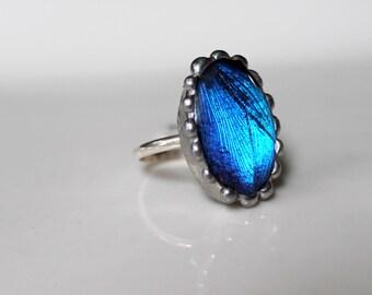 Blue Morpho Butterfly Sterling Silver Ring, Blue Butterfly Oval
