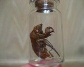 """A Cicada Molt Molted Moltshell Exoskeleton (preserved w/ tiny sage herb) within a 1"""" SEALED glass Vial Pendant 16"""" Necklace-Pick your color!"""