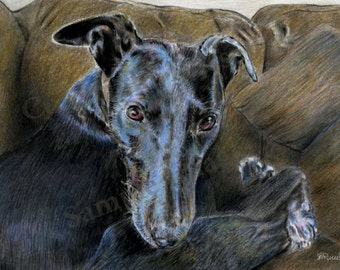 Black 4 - Art Print of original Greyhound Whippet drawing by English Artist Stephen Russell of RussellArt