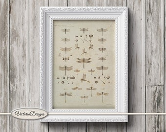 Dragonfly Mini Poster vintage crafting paper craft art prints wall art instant download printable paper digital collage sheet - VDWAVI1597