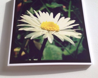Square Greeting Card - Daisy