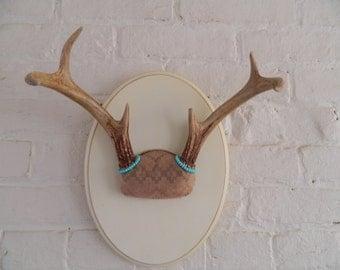 Vintage Mounted Deer Antlers - Repurposed - BoHo