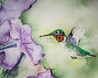 Large watercolor painting of Ruby Throated Hummingbird in purple petunia