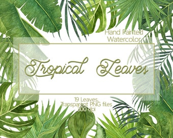 Tropical leaves - Watercolor leaves clip art, Monstera leaves, Banana Leaf, Palm Tree, Botanical Leaf, Hand painted leaves, Greenery, Leaf