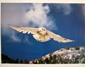 Large Nature print Snowy White Owl In Flight Arctic Snowscapes Owl Print photography Bird Animal Framable photography Christian prints art