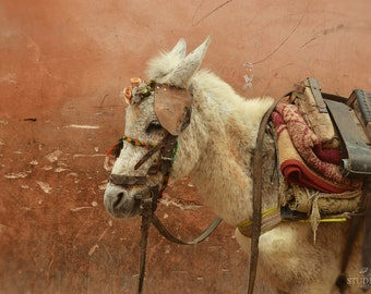 Moroccan Decor, Travel Photography, Morocco, Animal Art, Donkey, Rustic Old Wall, Pack Mule, Fine Art Photography, Earth Tones, Burnt Sienna