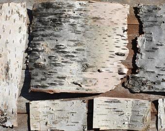 Birch Bark Sheets Etsy