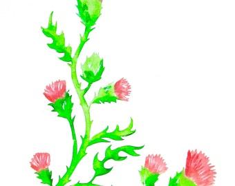 Thistle Print, Scottish Pink Thistle Painting, Thistle Giclee Print, Thistle Art, Thistle Home Decor, Thistle Wall Decor, Thistle Gifts