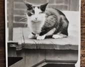 Original Vintage Photograph Pretty Purrfect