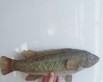 SALE Vintage Fish Taxidermy