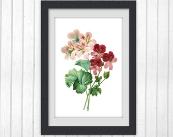 Botanical Print, Floral Printable  8x11 botanical art print produced from a vintage book plate. #INSTANT DOWNLOAD 56