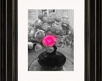 Single Ranunculus - Photography by Maria