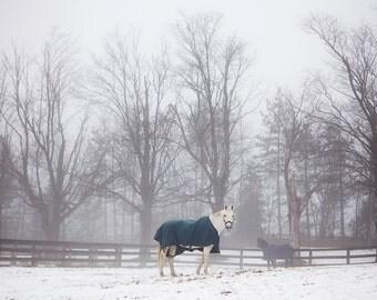 white horse in winter fog caledon ontario canada