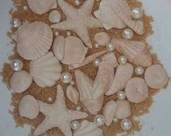 "24 Edible SEASHELLS 2"" or less and various shapes / gum paste / sugar fondant / cake decorations or cupcake toppers"