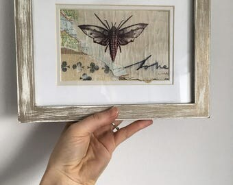 Framed Moth Drawing on Vintage Map