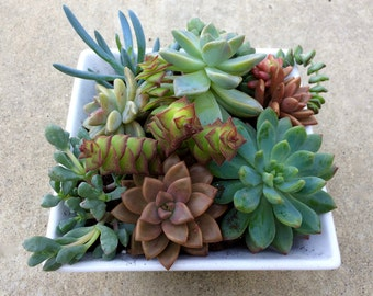 SUCCULENT TERRARIUM, #5, Birthday Gift, Valentines Gift, Easter, Mothers Day