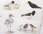 5 Beach-nesting Birds greeting cards inc DONATION to Birdlife Australia. Wildlife art colour pencil illustrations on recycled paper.