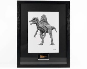 Spinosaurus Fossil Tooth & Signed Artist Print