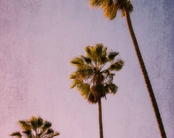 Los Angeles photography, palm tree photography, beach decor, california living, california photography, purple, mauve, pink, large wall art