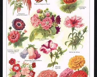 Flower Varieties annual PLANTS PETUNIA ZINIA color lithograph print Natural history  Botanical art original authentic print