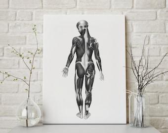 Anatomica Anatomy Art Print