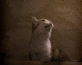 cat photography | animal photography | still life | wall art