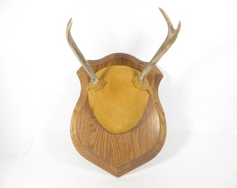 Vintage Mounted Deer Antlers - Found Mounted Antlers with Skull