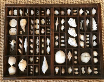 White Seashell Study in Vintage Printers Tray