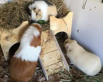 Guinea  Pig Play Castle (hours of fun for your pet.)