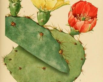 flowering cactus printable prints from 1919 104 printable jpegs