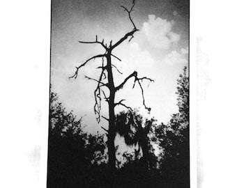 Black and White Photography 'Skeleton Tree'