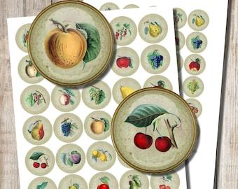 Vintage Fruit Images, Digital Collage Sheet, 1 inch Cricles, Printable Fruit Illustrations, Fruit Craft, DIY, Instant Download, b8