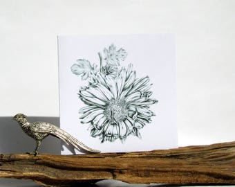 "Botanical art pencil drawing of flower Chrysanthemum 'Vagabond Prince' printed in black ink on white greeting card (blank inside) 6""/15cm"