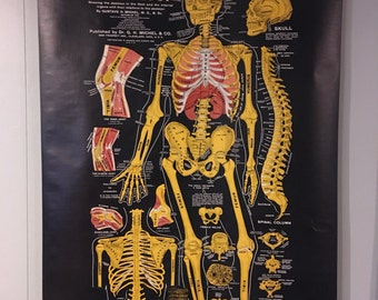 Antique Chart Of Osteology Anatomical Chart 1920 Human Body Bones Original