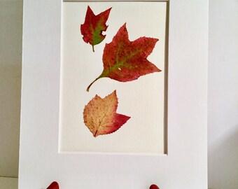 Real Pressed Flower Fern Leaf Botanical Art Herbarium of Oak Leaf Hydrangea Leaves 8x10 OR 11x14