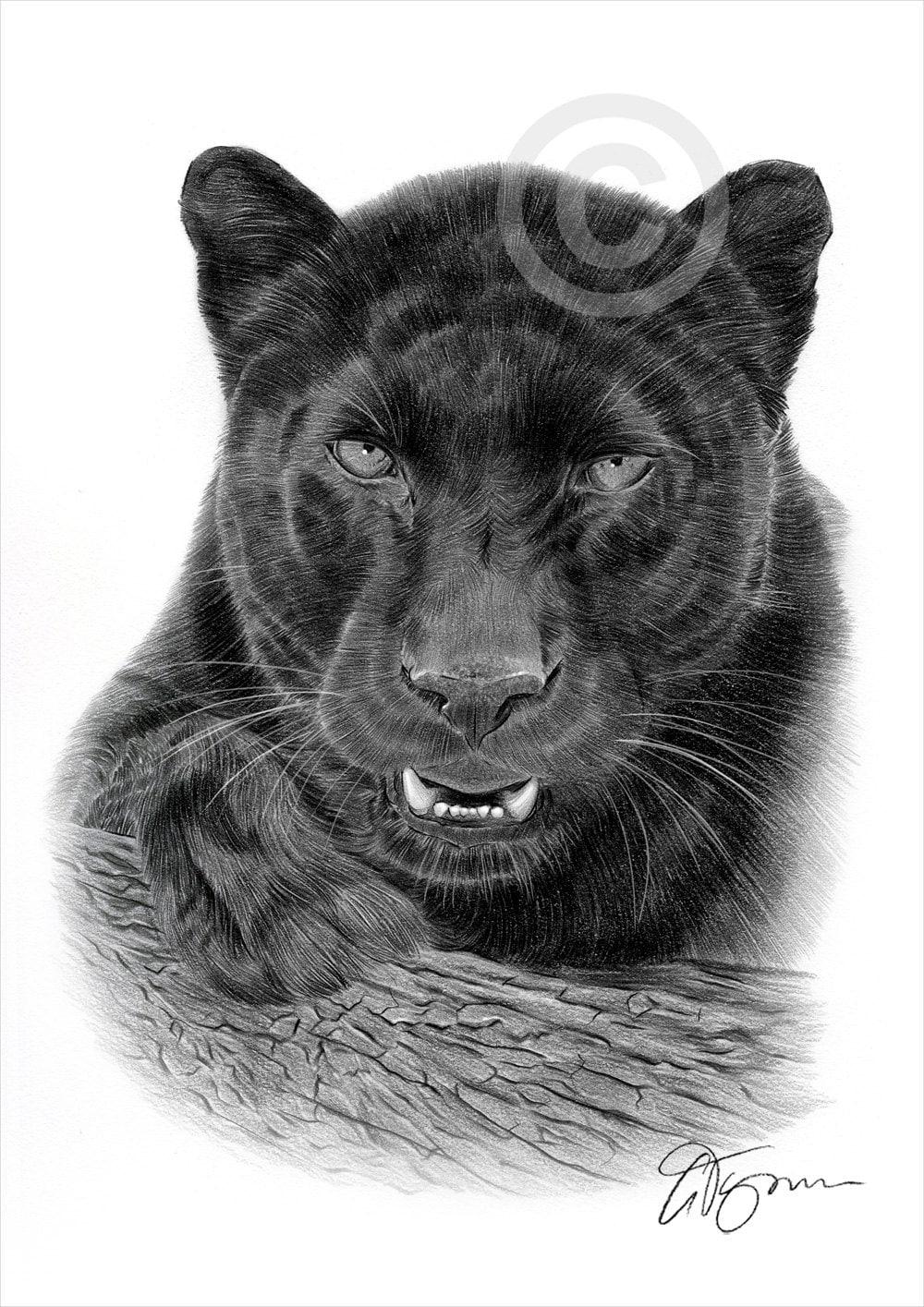 Black Panther pencil drawing art print A4 size artwork